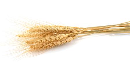 tritium: Ear of barley on white background