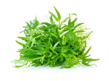 Morning glory seedlings on white background Reklamní fotografie