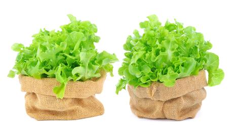 Green lettuce on white background Stock Photo