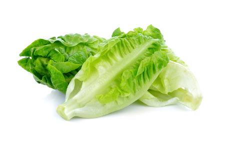fresh baby cos lettuce on white background 写真素材