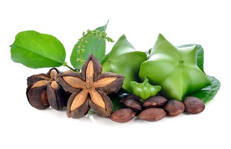 白い背景にサシャインチ、新鮮なカプセル種子のサシャインチピーナッツの果実 写真素材