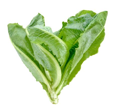 Cos Lettuce on White Background Zdjęcie Seryjne - 122184993
