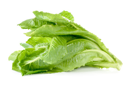 Cos Lettuce on White Background Zdjęcie Seryjne