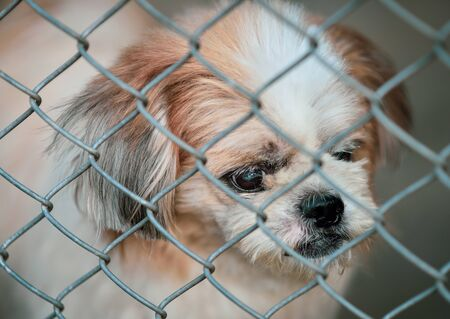 Lonely dog was trapped in cage and waiting for rescued from human. It's a pet that the best friend of human. Foto de archivo