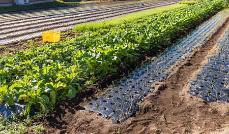 pollution free: the vegetable garden in japan