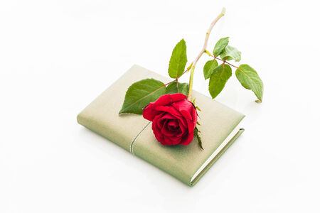 demure: red rose with blank notebook on white background Stock Photo