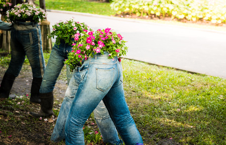 beautiful petunia flowers decorate on Jeans in the garden