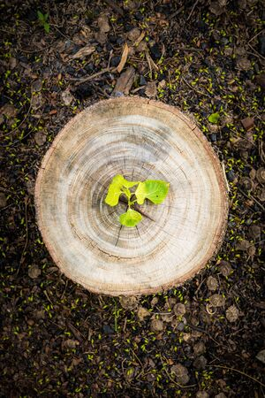 Green leaves with wood stump. New development and renewal as a business concept Stok Fotoğraf