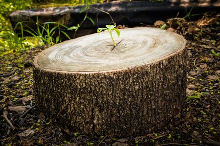 Green leaves with wood stump. New development and renewal as a business concept Imagens