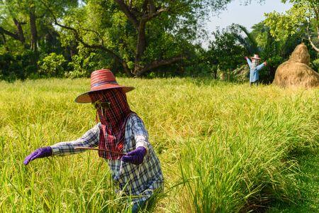 espantapajaros: espantapájaros en el campo de arroz
