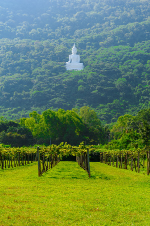 thep: White Buddha statue on the mountain at Wat Thep Phithak Punnaram Nakhon Ratchasima Province, Thailand.