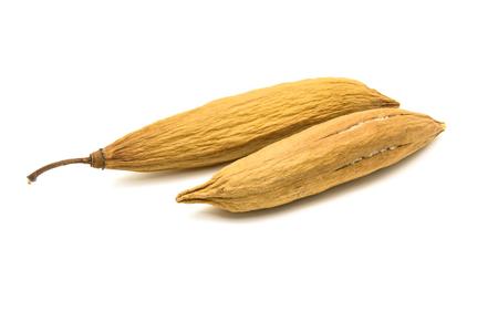 l natural: Kapok, Ceiba pentandra or White silk cotton tree( Ceiba pentandra (L.) Gaertn. Wong) Bombacaceae. kapok seeds with white fiber for making pillow isolated on white background