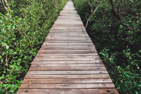 Tree tunnel, Wooden Bridge In Mangrove Forest at Laem Phak Bia, Phetchaburi, Thailand Banco de Imagens