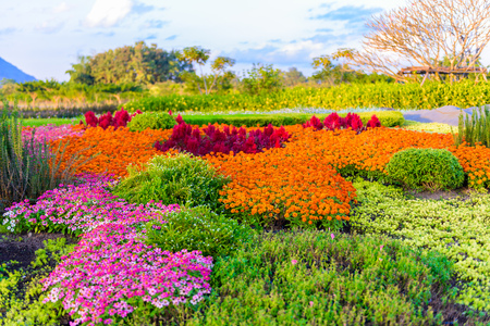 variegated: multicolored flowerbed, colorful flower on a lawn or garden Stock Photo