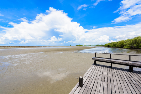 View from Nature learning path, made from wooden, and walk through Ceriops tagal forest in mangrove forest. Nature Preserve and Forest Klaeng at Prasae, Rayong province, Thailand Stock Photo