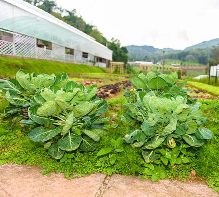 Vegetable garden Herbs, and vegetables in backyard formal garden. Eco friendly gardening