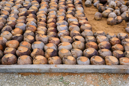 Group of Coconut  is cutting head Arrange, Sort orderly preparations for such varieties for planting coconut trees, Layered bottom with coconut shell's hair, in the nursery farm