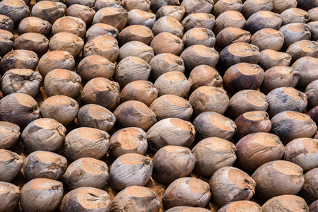 Group of Coconut  is cutting head Arrange, Sort orderly preparations for such varieties for planting coconut trees, Layered bottom with coconut shells hair, in the nursery farm Stock Photo