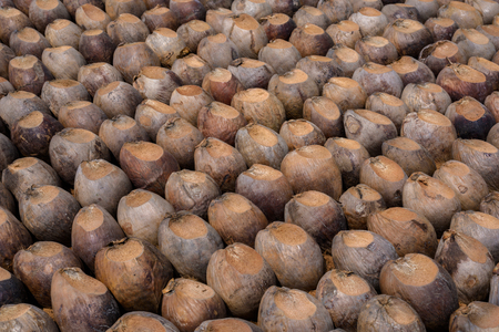 Group of Coconut Perfume is cutting head Arrange, Sort orderly preparations for such varieties for planting coconut trees, Layered bottom with coconut shells hair, in the nursery farm