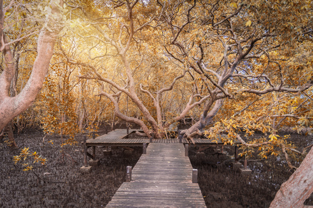Wooden bridge or Walkway and big tree landmark at Mangroves in Tung Prong Thong or Golden Mangrove Field at Estuary Pra Sae, Rayong, Thailand. Fantacy Color Tone