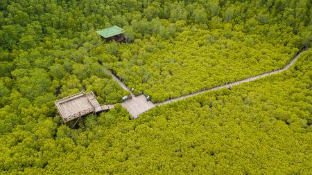 Aerial view, Viewpoint of Mangroves inTung Prong Thong or Golden Mangrove Field at Estuary Pra Sae, Rayong, Thailand