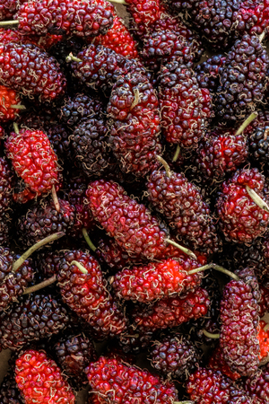 background of organic mulberry fruit, Black ripe and Red unripe