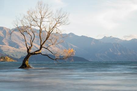 tree die dry in lake on morning.