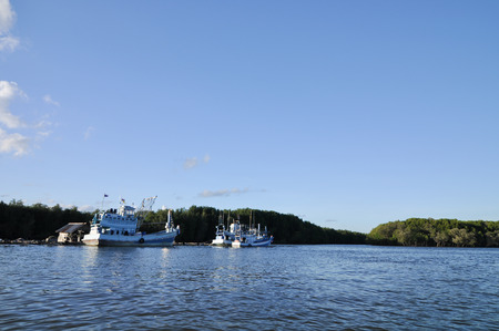 forest at the river estuary and have small boat background is island in clear blue sky day, summer time
