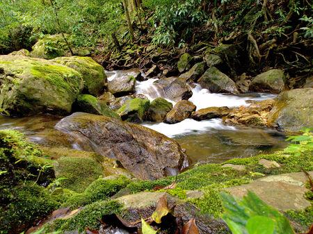 greengrass: waterfall on moss and rock Stock Photo