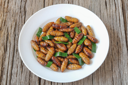 Insects food.Fried silkworm pupae with pandan.Silkworm pupae are rich protein and good fats.Insects are food future for all people