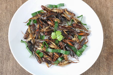 Insects food.Fried crickets with pandan top view.Crickets are rich protein and good fats.Insects are food future for all people