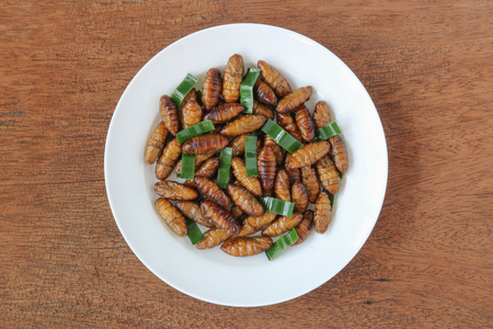 Insects food.Fried silkworm pupae with pandan top view.Silkworm pupae are rich protein and good fats.Insects are food future for all people