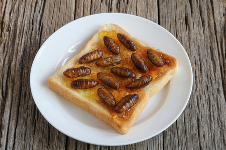 Insects food.Fried silkworm pupae with toast.Silkworm pupae are rich protein and good fats.Insects are food future for all people Archivio Fotografico