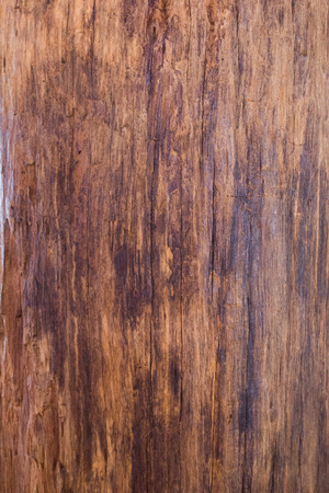 wood structure: wood texture