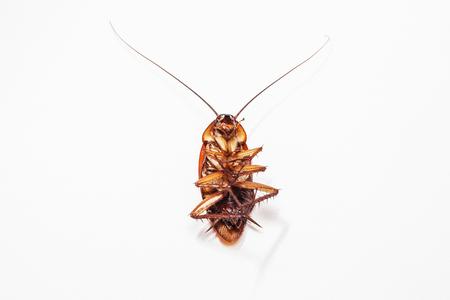 ゴキブリの黒い背景と白