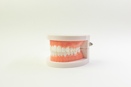 Tooth model on white background for dental content.