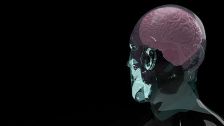 brain inside crystal head for education or sci content 3d rendering