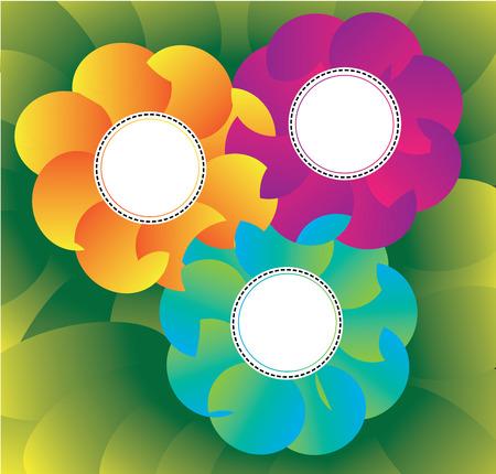 margerite: three flower Vector illustration  Illustration
