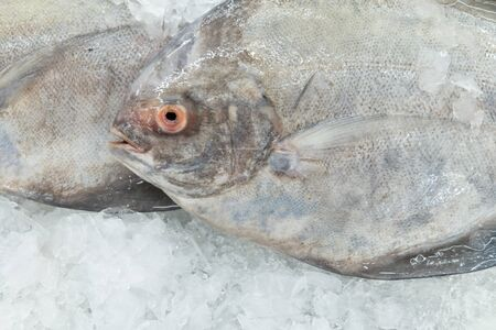 Fresh White Pomfret on Ice  photo