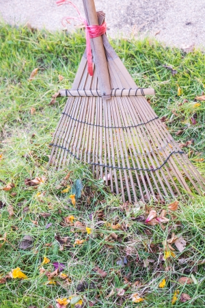 Cleaning dried grass and leaf in the garden by rake  harrow  photo