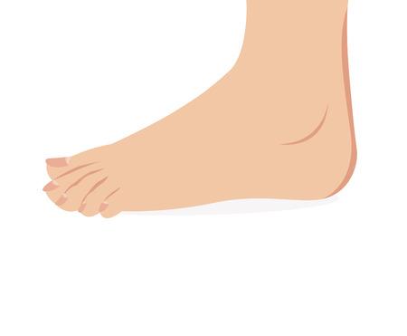 vector of female foot standing  human foot   Vector