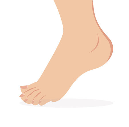 vector of female foot standing  human foot   Vector