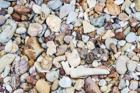 stone and coral at the beach  photo