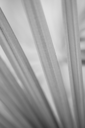 Abstract green leave background in black and white Stock Photo
