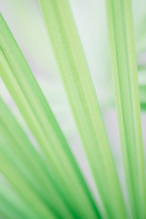 Abstract green leave background