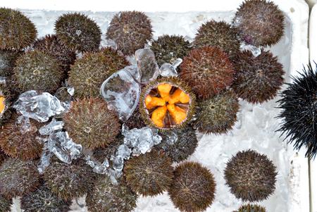 uni: Uni or sea urchin roe at Hakodate Morning Market, Hokkaido, Japan Stock Photo