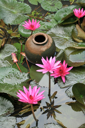 water garden: Water garden with water lilies and clay pot, Chumphon, Thailand Stock Photo