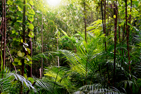 Jungle achtergrond, Krabi, Thailand Stockfoto