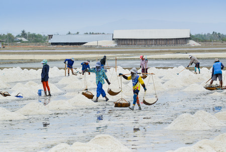 briny: Workers are carrying sea salt to keep in the barn, Samut Sakhon, Thailand. Editorial