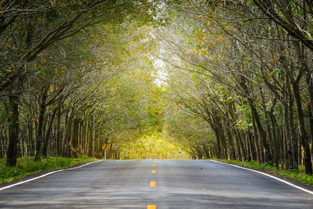 The road through the Rubber tree plantation in Phuket, Thailand Stock Photo